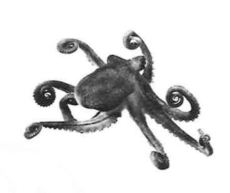 Eames octopus