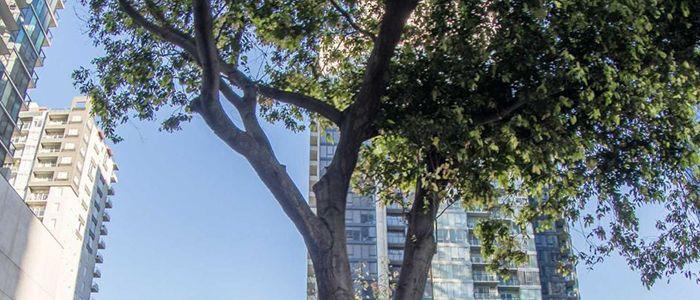 Melbourne tree-tw